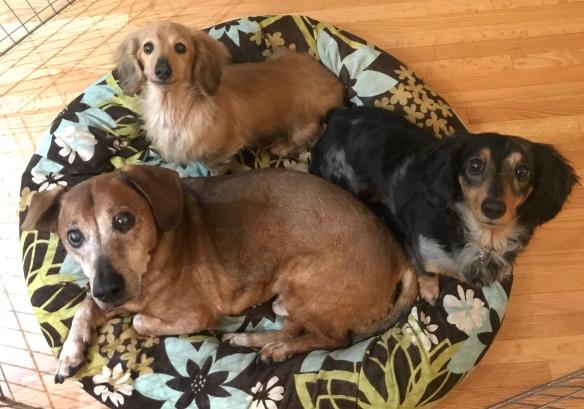 Rufus, Maude, and Stella share a snuggle.